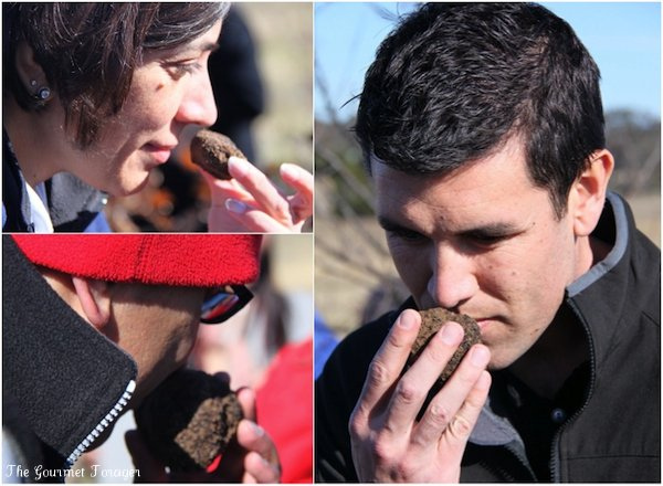 Assessing the truffle's scent
