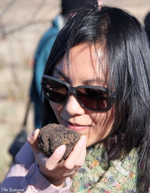 Assessing truffle scent