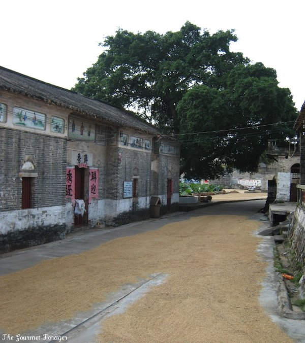 Zhaoqing village