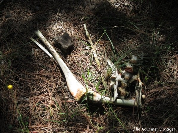 Bones in Belanglo State Forest