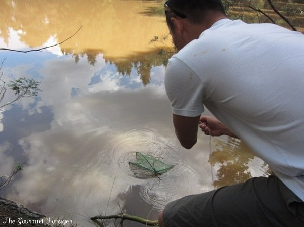 Retrieving the yabby trap
