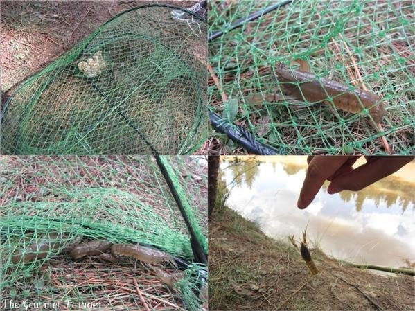 Yabby catching success in Belanglo State Forest