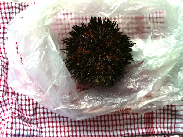 Sea urchin protective gear includes plastic bags and tea towels to avoid being spiked