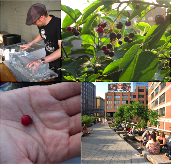 Foraging on The High Line, hand shaved ice, juneberries